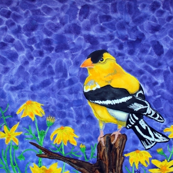 #93 - THE AMERICAN GOLDFINCH REVISITED x