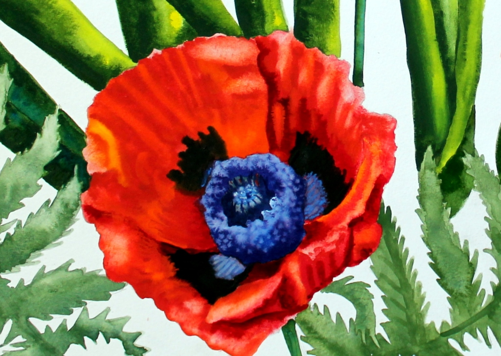 #156- MY POPPY PATCH (1)b