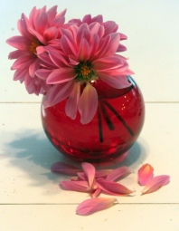 #232 - pink dahlias 3