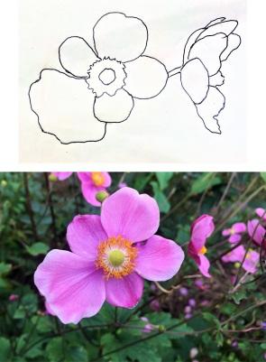 ____anemone